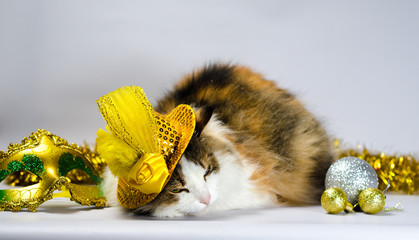 wicked cat in a yellow carnival hat with sequins and a feather n