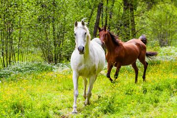 zwei Pferde auf einer Wiese im Sommer