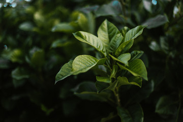 Leaves of green plant in garden