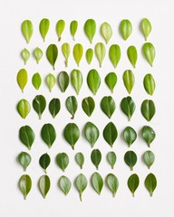 Variety of leaves isolated against white background