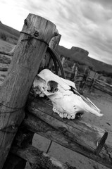 Horse skull on wooden fence outdoors