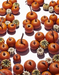 Pumpkins randomly placed against white background