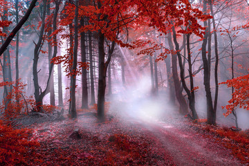 Deurstickers Bossen Mystical red forest