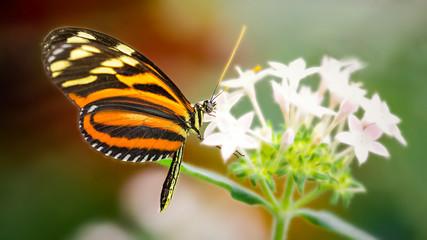 Gossamer winged butterfly on a flower
