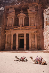 Camels in front of the Treasury Monument (Al Khazneh) in Petra, Jordan