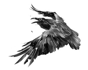 drawn isolated raven bird in flight monochrome