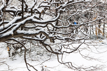 Winter forest. Snow on the branches of trees.