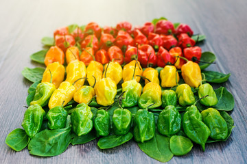Hot peppers layered in row from red to green with a gradient