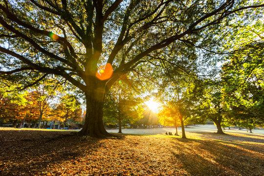 Beautiful autumn light sunset on the park, Atlanta.