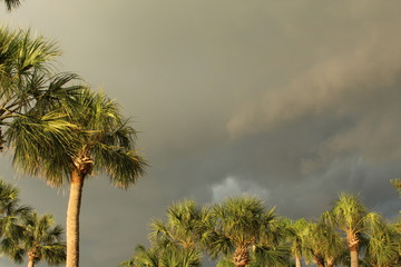 Dark storm clouds with palm trees