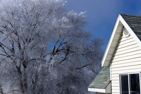 Beautiful Frosted Trees