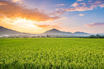 Beautiful sunset over the paddy fields at Phrao, Chiang Mai, Thailand.