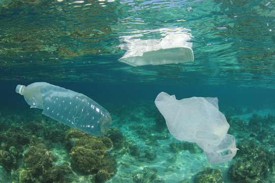 Plastic bottles, bags and styrofoam containers pollute coral reef