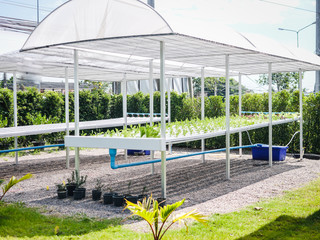Hydroponics system greenhouse and organic vegetables salad in hydroponics farm for health, food and agriculture concept