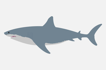 Shark isolated on white background. Vector illustration.