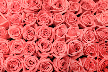 big bunch of multiple pink roses, top view