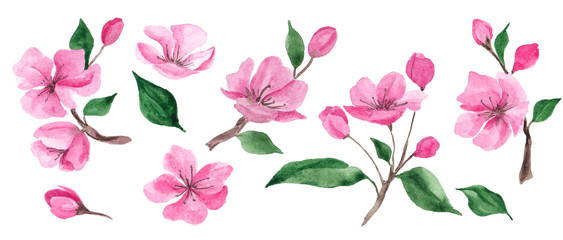 Watercolor illustration with spring cherry flowers