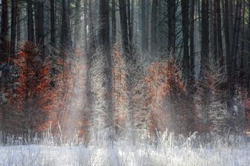 las,zima i mgła