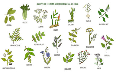 Ayurvedic herbs for asthma treatment