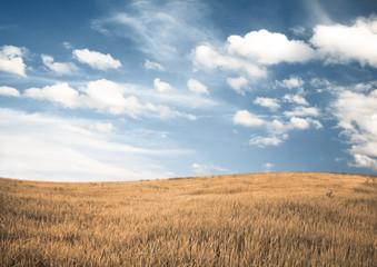 Photo Stands Night blue autumn fields