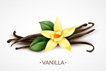 Vanilla Flower Realistic Image