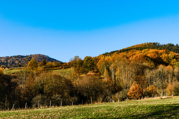 Autumn colors of nature in Alsace, colorful leaves and fgorests