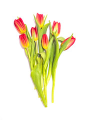 Red and yellow tulip flowers bouquet on white background