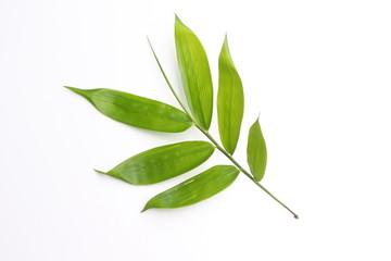 Fresh bamboo leaf on white
