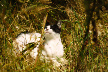 Black and white street stray kitten sits in the green grass.
