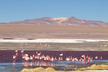 Laguna Colorada flamingos, Bolivia