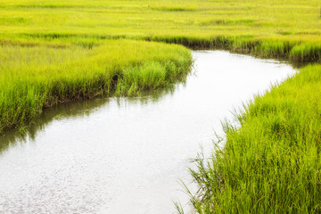 salt marsh at Shem Creek in Mount Pleasant South Carolina