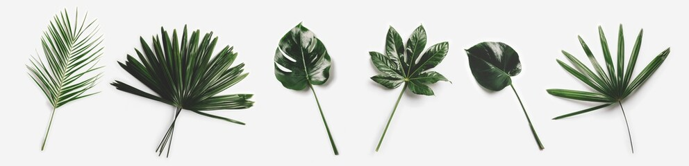 Foto auf Leinwand Blumen Green palm leaves isolated on white background.