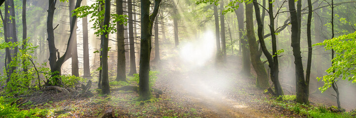 Panorama of a forest in morning mist Fotoväggar