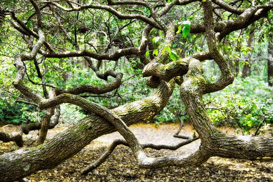 angel oak tree in John's Island South Carolina