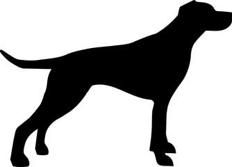 English Pointer silhouette black