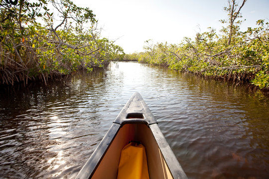 A canoe in mangroves, Everglades National Park, Florida.