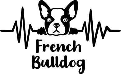 French Bulldog frequency