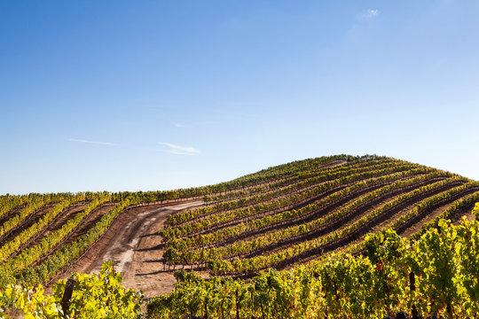 Healdsberg, Sonoma County, California: Ferrari-Carano Winery.