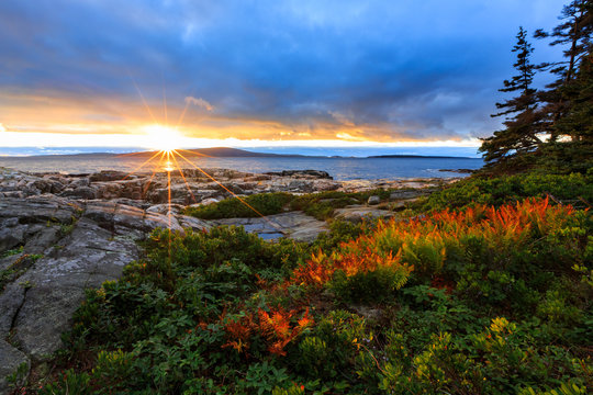 Acadia National Park Ocean Sunset With Red Ferns