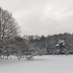 Winter forest. Botanical Garden. Evening.
