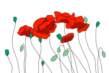 Red field poppies, flowering poppies. Buds, stems and seeds