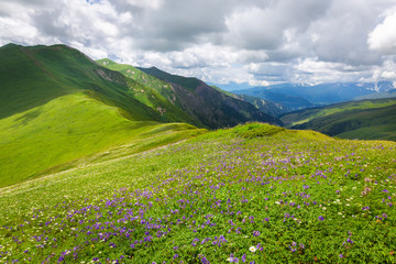 Beautiful summer mountain landscape with flower meadow. Caucasus