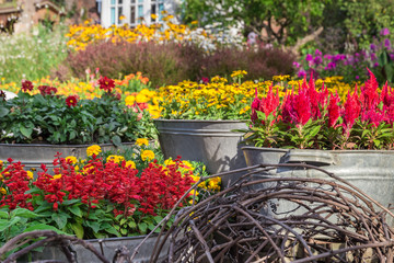 Mix of flower pots in the garden