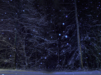 snowfall in the forest by winter night