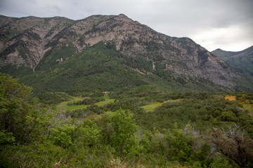Wasatch Mountain Meadow