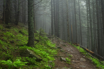 Mountain forest with stones. Mountain road in the forest. Carpathian forest in the mountains. Journey through the Carpathian forests. Beautiful mountain landscape.
