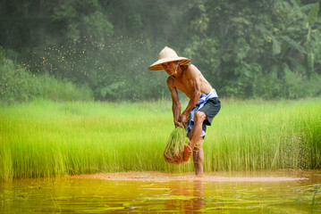 man farmer thai hit the rice holding on hand in rice field agriculture to plant farmland