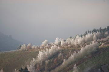Frostblüten im Ruwertal