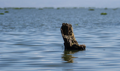 Wall Paper - Dried tree in water