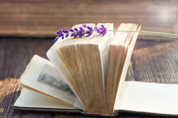 Vintage open book and lavender flower. Sunlight, soft focus